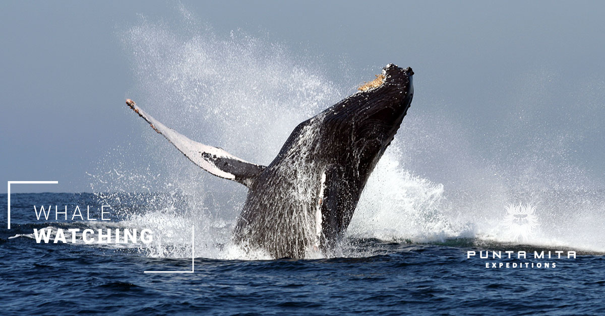 punta_mita_expeditions_whale_watching_graphicillusion